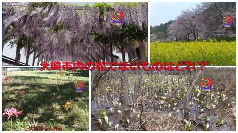大崎検定問252(初級編)大崎市内の花でないものはどれ?