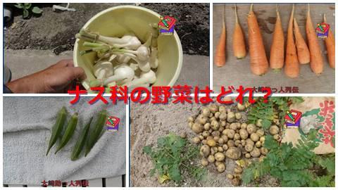 大崎検定問255(初級編) ナス科の野菜はどれ?
